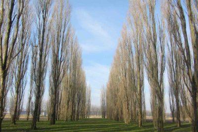 bomen-Groene-kathedraal-Almere-bomen