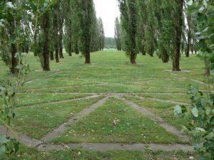 bomen-Groene-kathedraal-Almere