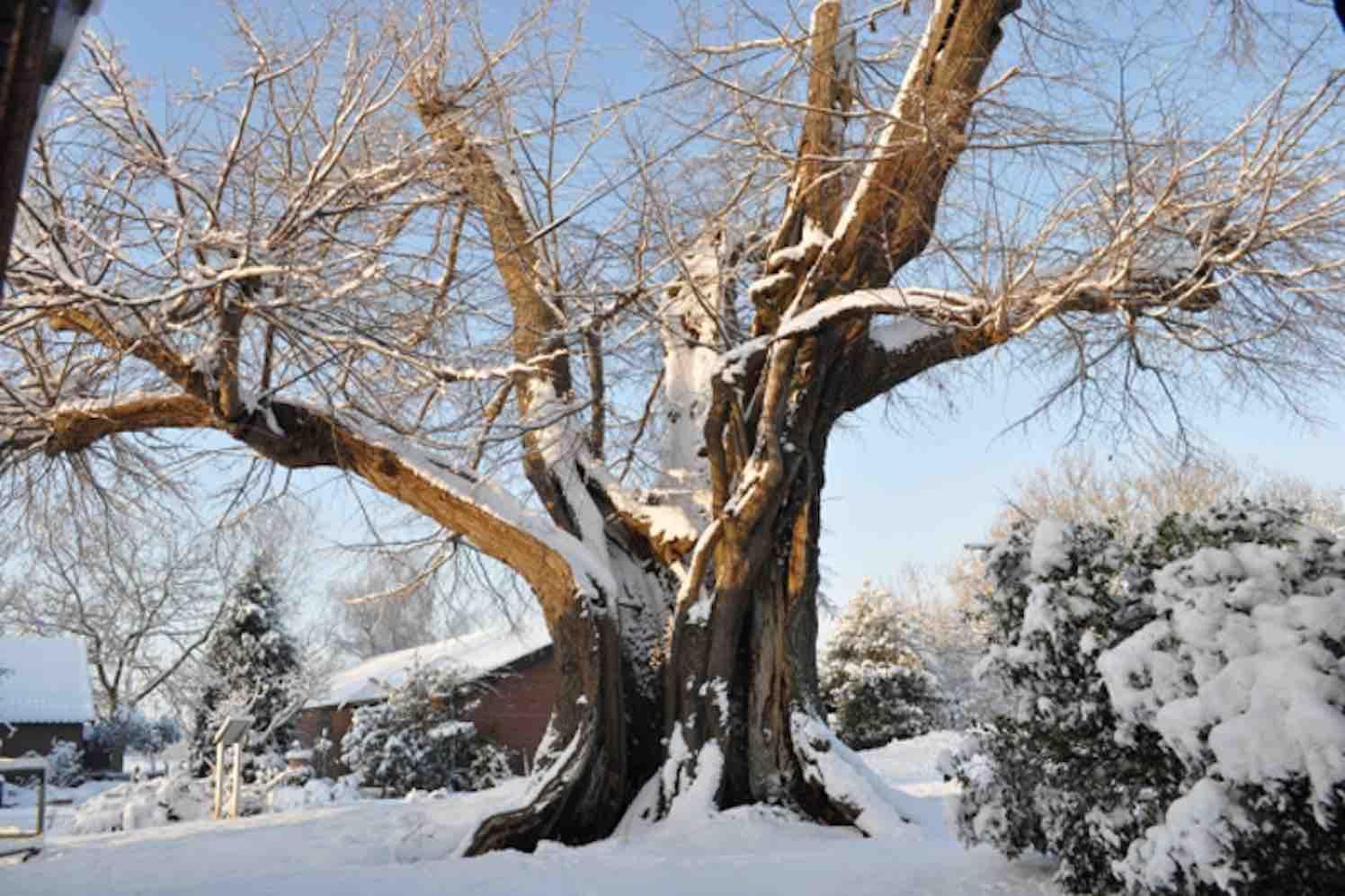 bomen in utrecht