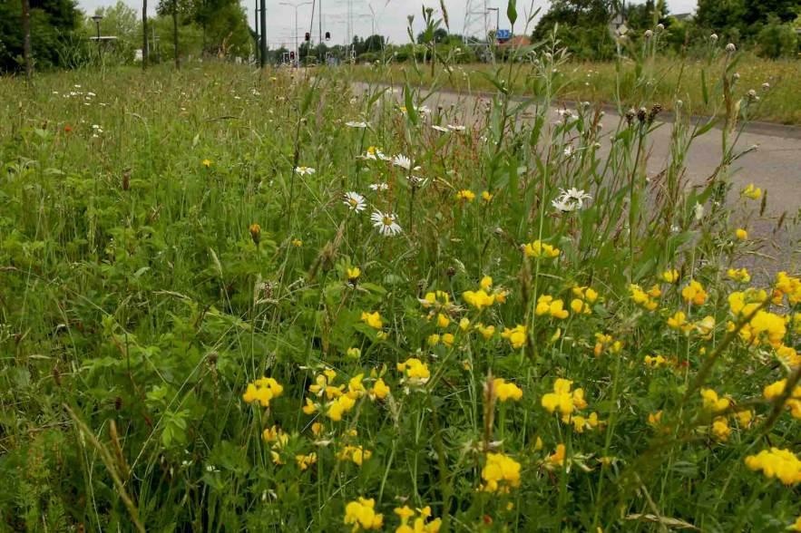 kleurkeur Bijenstrategie, maaibeheer en biodiversiteit
