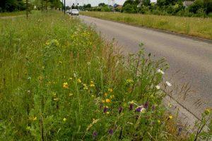 Bijenstrategie, maaibeheer en biodiversiteit
