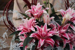 roselily lilium