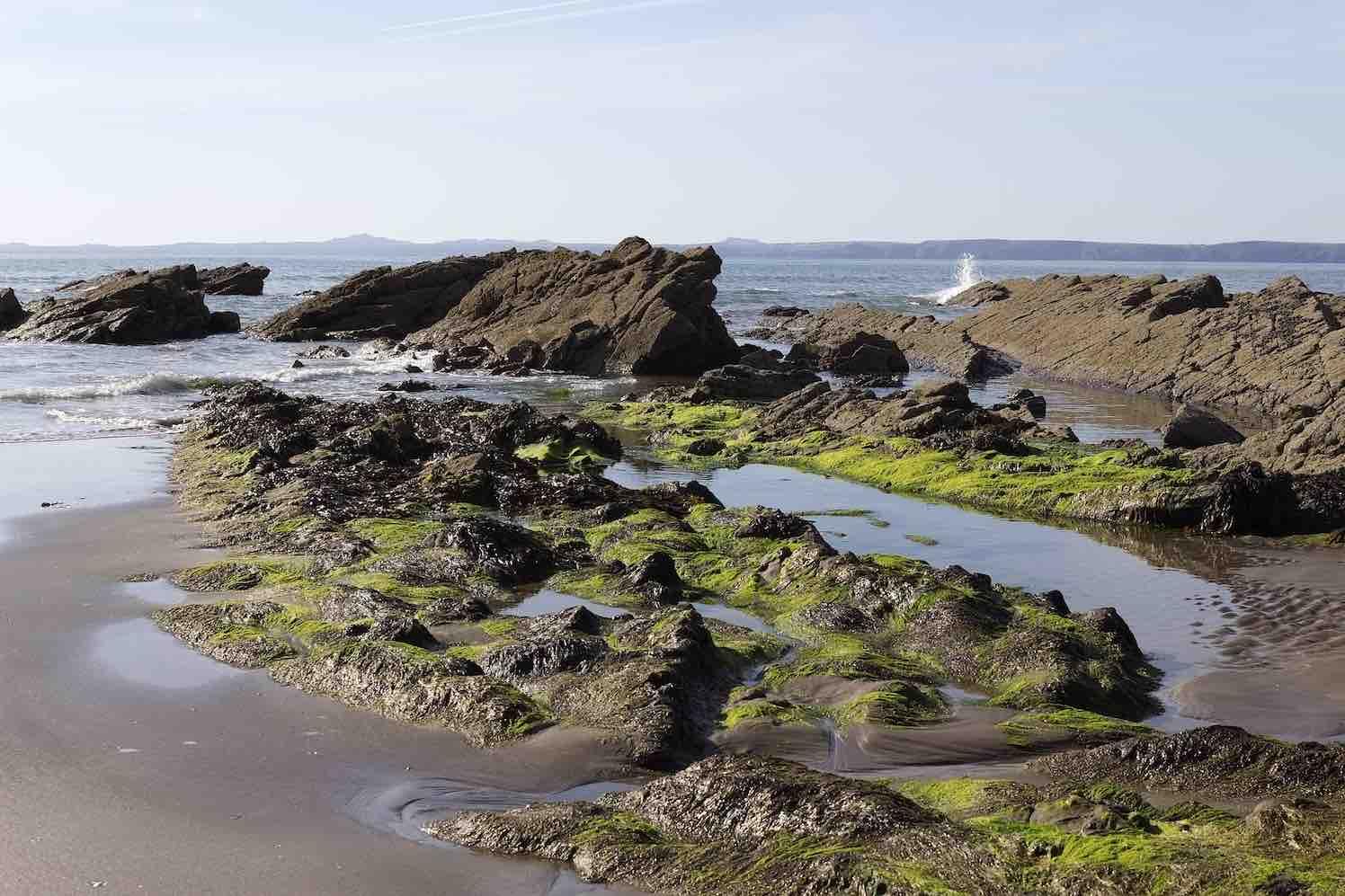 Serie Zeewier: zeewier als verzorgingsproduct