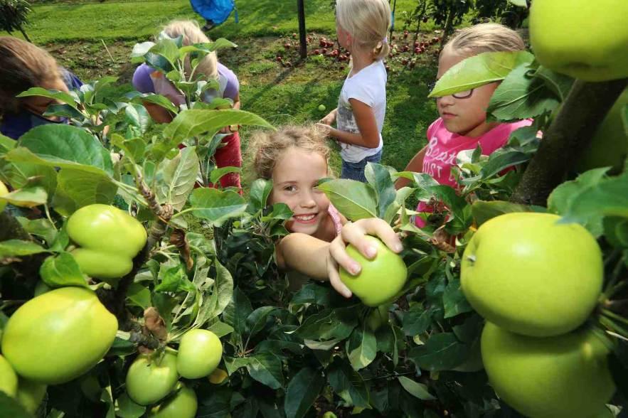 nieuwe appelrassen