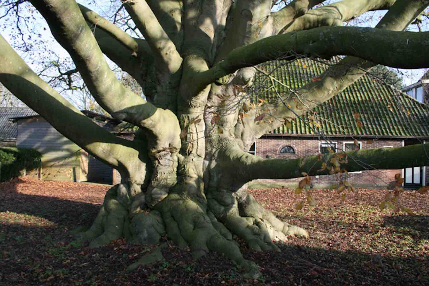 bomen noord-holland