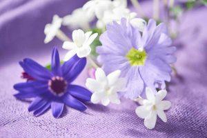winterbloeiers jasmijn asbloem primula