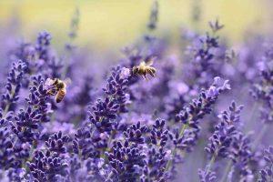 landelijke bijenwerkdag