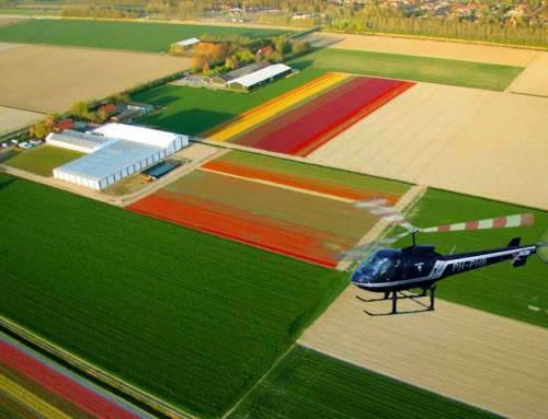 Helikoptervluchten boven de tulpenvelden
