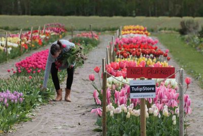 eetbare tulpen