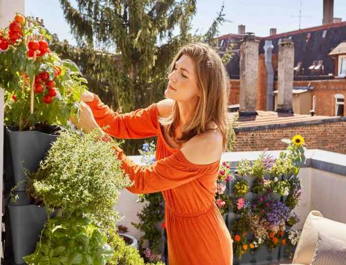 NatureUp, het nieuwe verticaal tuinieren