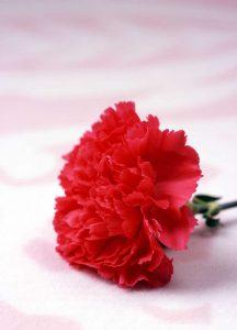 bloemenshows