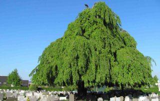 top 10 bomen zeeland