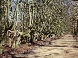 bomen van zeeland