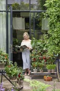 groenteplanten sfeer