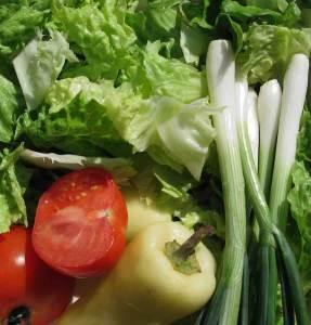 groenteplanten assortiment