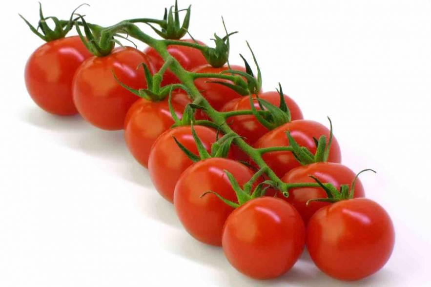 groenteplanten tomaten