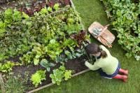 moestuinieren, nationale tuinweek