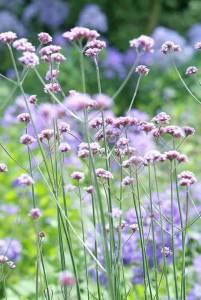 nectarplanten