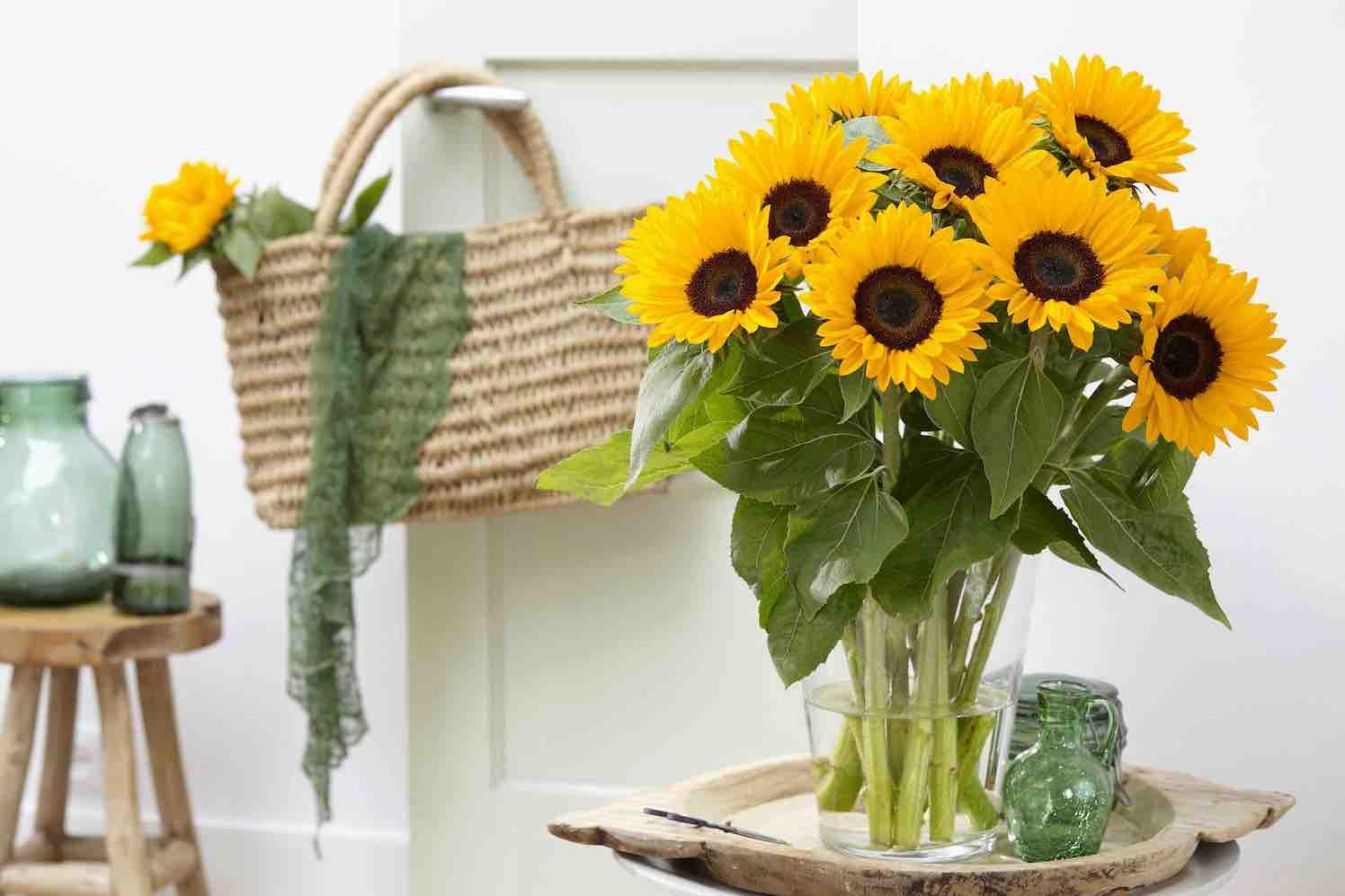 Nieuwe Helianthus Sunrich brengt de zon thuis