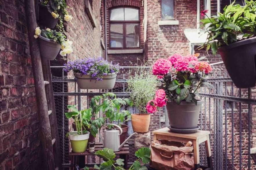 Planten Voor Balkon.Meer Planten Op Balkon En Terras Groenvandaag