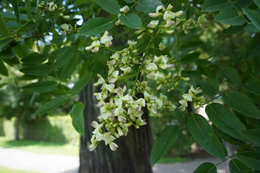 bomen limburg