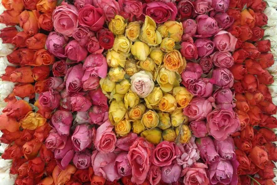 wereldtop rozenfestival