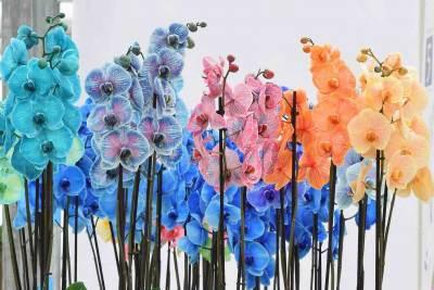 gekleurde orchideeen