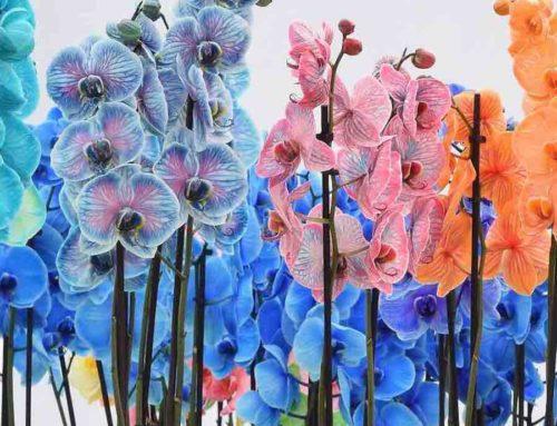 Colorchid orchideeën