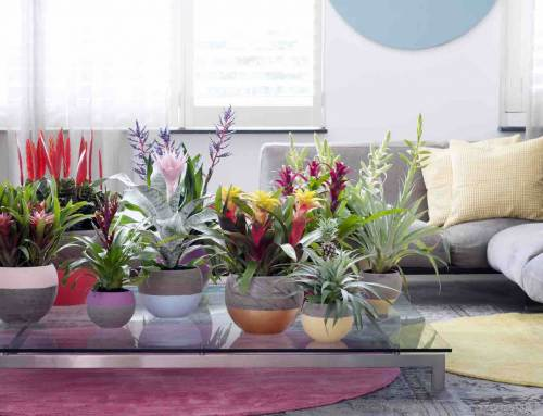 Urban jungle in huis met bromelia's
