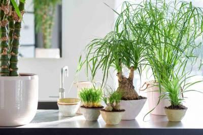 woonplanten en huisdieren