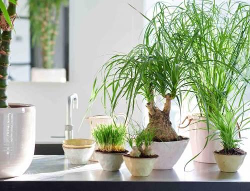 Woonplanten voor mensen met huisdieren