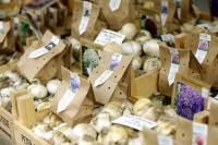 bloembollenmarkt keukenhof