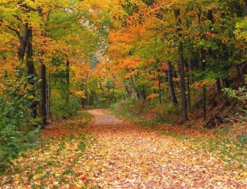 Ontdek de natuur tijdens Week van het Landschap