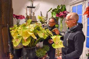 bloggers anthurium