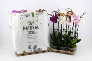Stolk flora Plastic