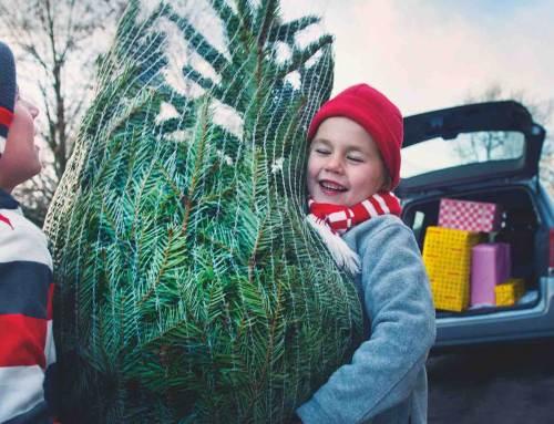 Grote boom en kerstbomen-in-pot populairst
