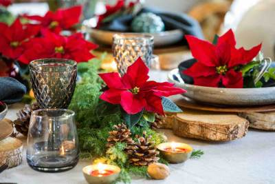 kerststerren, tafeldecoratie