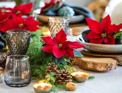 Kerststerren: tafeldecoratie met sterallure