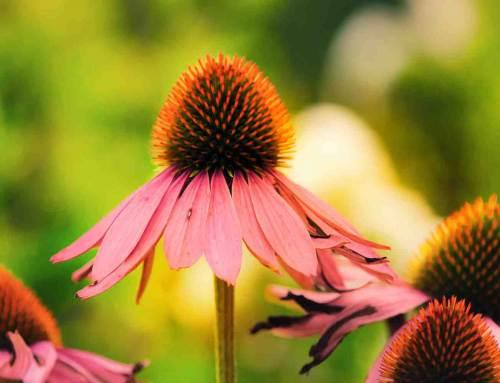 Zonnehoed en zon: zomer in de tuin