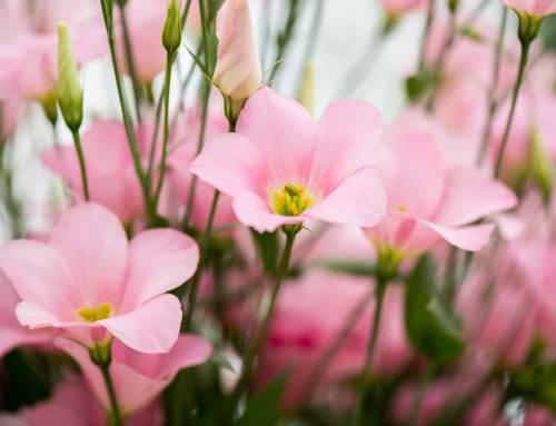 Groen Kort: wonen bij de boer en geurende rozen