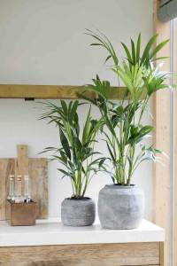 4 grote kamerplanten