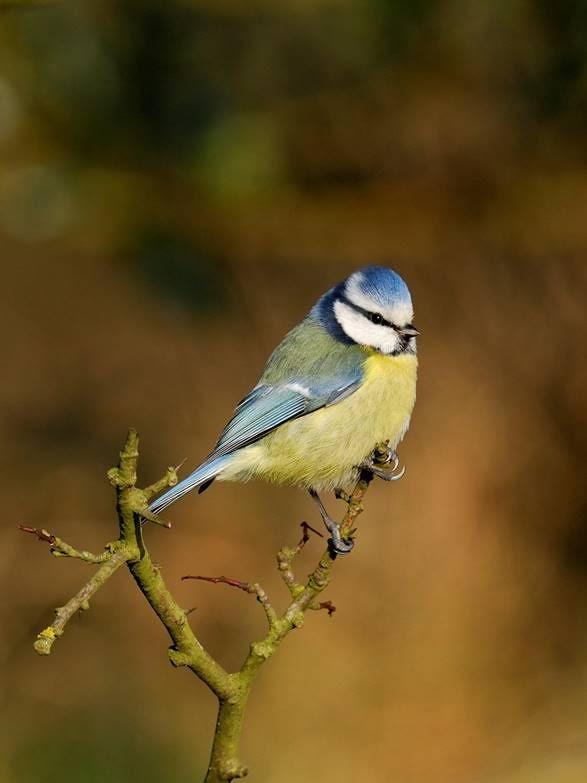 vogels tuin