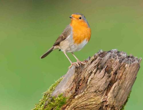 6 tips om vogels door de winter te helpen