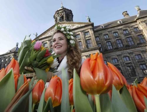 Tulpenseizoen kleurrijk gestart op Dam in Amsterdam