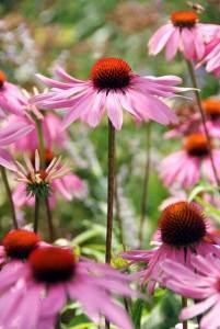 8 vaste planten