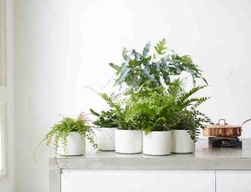 Varens: Woonplanten van de maand februari