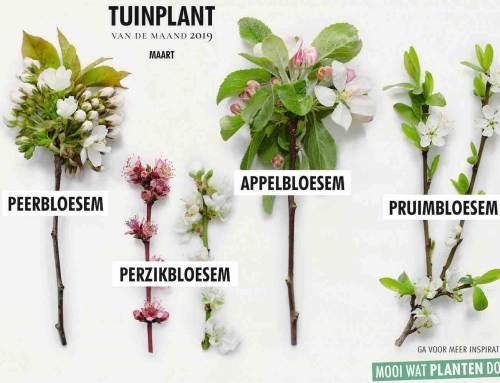 Bloesembomen tuinplanten van de maand maart
