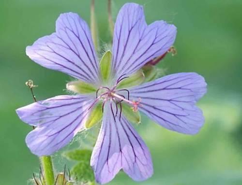 8 tuinplanten die prachtig bloeien