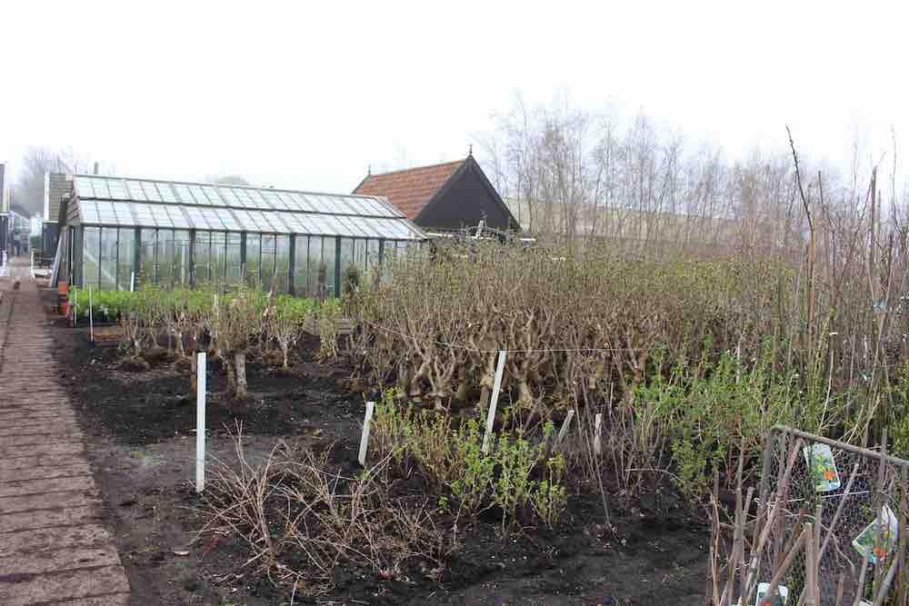 Historische Tuin Aalsmeer : Verkoopdag historische tuin aalsmeer groenvandaag
