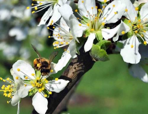 Naturalis en Albert Heijn op de bres voor insecten